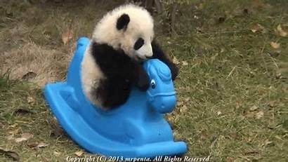 Pandas Panda Endangered Really Species Hump Help