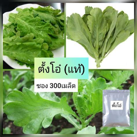 เมล็ดผักตั้งโอ๋ 300เมล็ด ตั้งโอ๋ของแท้ ใบนุ่ม   Shopee Thailand