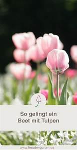 Tulpenzwiebeln Im Frühjahr Pflanzen : tulpenzwiebeln pflanzen blumenbeet anlegen tulpenzwiebeln tulpen garten und pflanzen ~ A.2002-acura-tl-radio.info Haus und Dekorationen