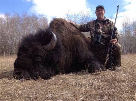Wood Bison Hunting