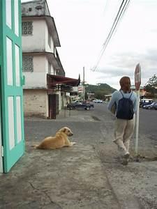Animals In Panama
