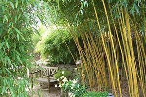 Bambus In Kübeln : bambus nicht vertrocknen lassen garten haus praxis ~ Michelbontemps.com Haus und Dekorationen