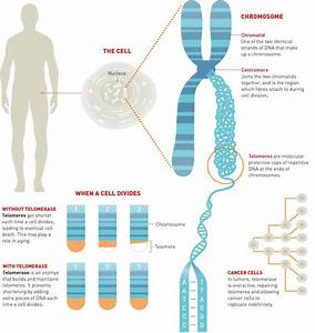 telomerase | biotechnology and society