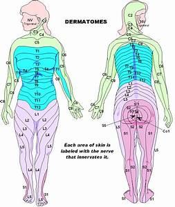 Dermatomes – mycerebellarstrokerecovery