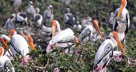 black spots in tamil nadu bird spots in southern india wandertrails com