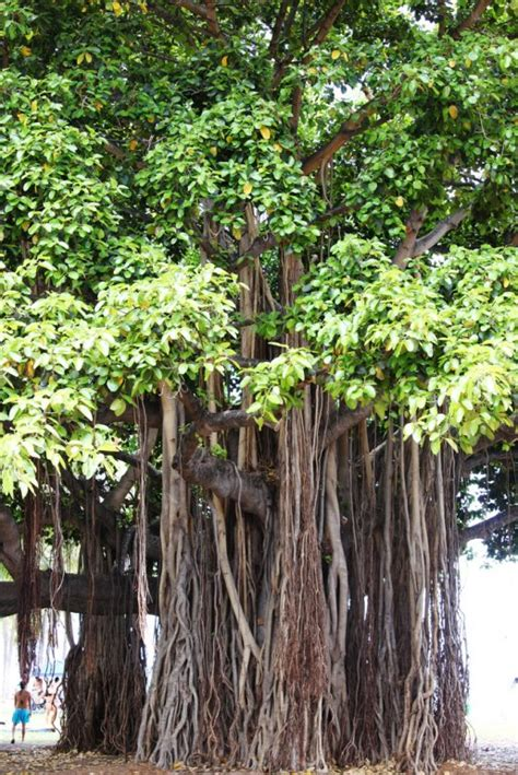 The World's Most Unique And Unusual Trees Travelerspress