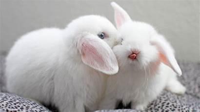 Bunny Cute Wallpapers Bunnies Rabbit Baby Rabbits
