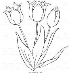 Tulip Flower Outline