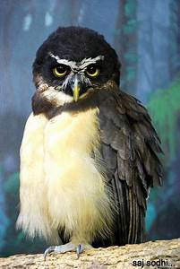296 best images about Beautiful Owls on Pinterest | Long ...
