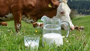 What U0026 39 S Really In Your Milk