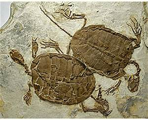 A New Approach to Earth History | 5. The origin of turtles