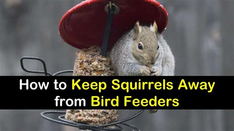 how to keep squirrels out of bird feeder 19 beautiful diy bird feeders