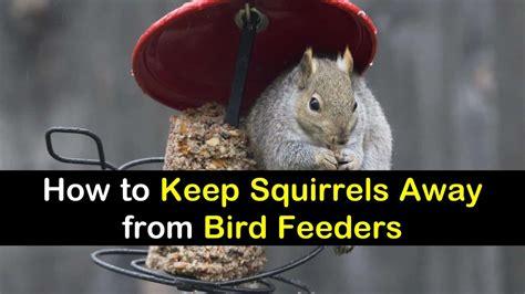 how to keep squirrels out of bird feeders 19 beautiful diy bird feeders