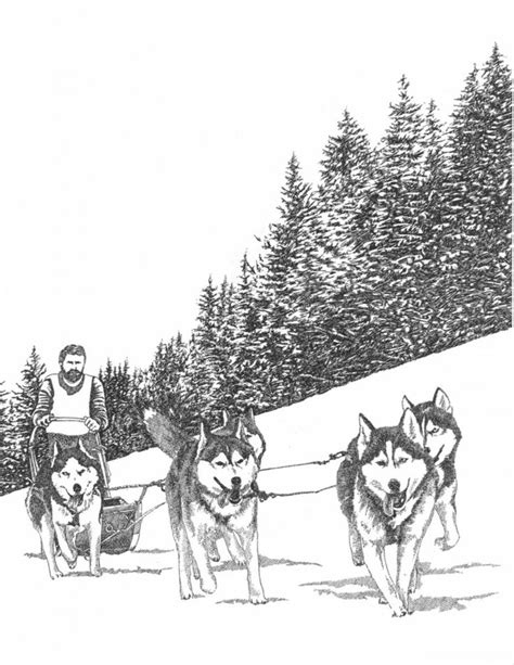 images  iditarod winter   pinterest coloring pages siberian huskies