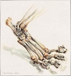 18 Best Dog Skeleton Images On Pinterest