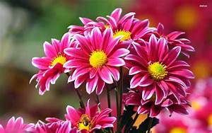 Best Pretty Flowers Wallpapers Widescreen Hd Images Top ...