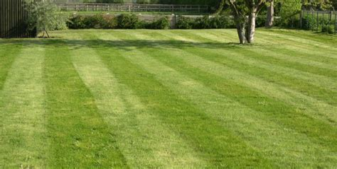 Tips For Grass Cutting & Lawn Care