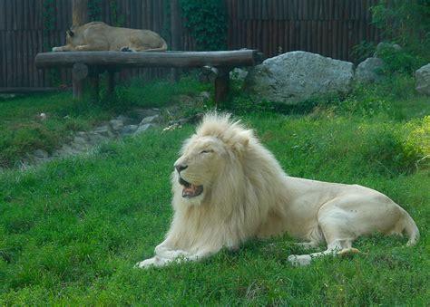 bratislava zoo slovakia lubos rojka web site