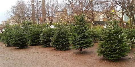 christmas trees cork ireland tree shop cork christmas