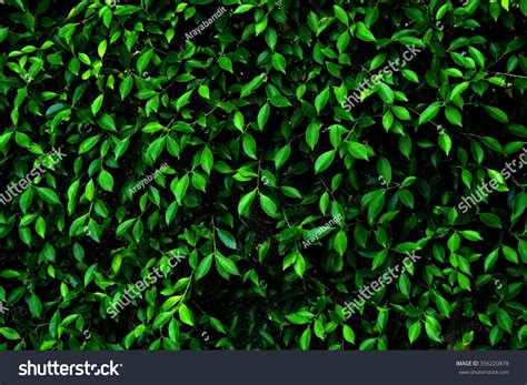Abstract Background Pattern Dark Green Leaves Stock