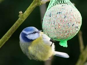 Vogelfutter Selber Machen Tannenzapfen : vogelfutter selbst machen ~ Lizthompson.info Haus und Dekorationen