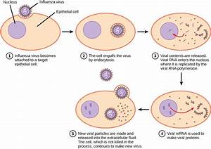 Virus Infections And Hosts