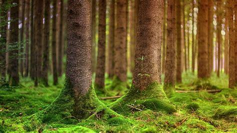 woodland forestry  sale  scotland galbraith