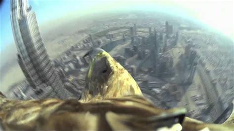 aigle equipe dune camera selance du  haut gratte