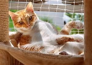 Gasgrill Auf überdachten Balkon Erlaubt : welche tiere sind auf dem balkon erlaubt ~ Orissabook.com Haus und Dekorationen
