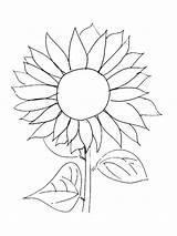 Sunflower Coloring Sunflowers Pages Drawing Easy Van Gogh Template Flower Printable Flowers Line Stencil Garden Drawn Adults Petal Colors Getdrawings sketch template
