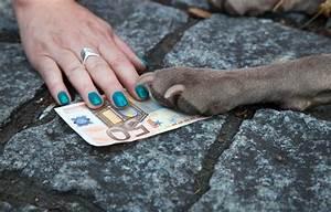 Handwerker Steuer Absetzen : spartipps f r tierfreunde welche kosten sie von der steuer absetzen k nnen agila ~ Frokenaadalensverden.com Haus und Dekorationen