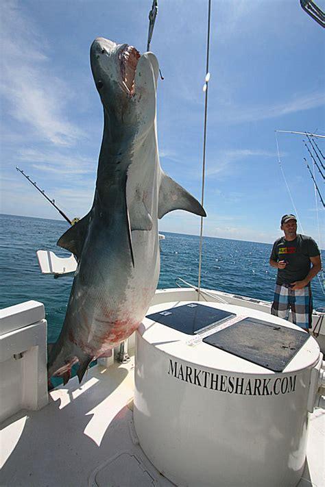shark tiger miami fishing florida giant caught huge massive boat capture tackle fish ever record monster charter international rods kenya