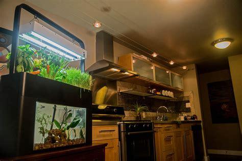 aquasprouts garden   aquaponics aquarium debuts