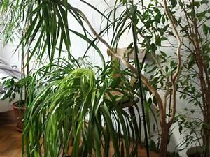 Schädlinge An Zimmerpflanzen : keine sch dlinge auf zimmerpflanzen radio wien ~ Orissabook.com Haus und Dekorationen