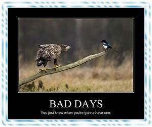 58 best If you had a bad day images on Pinterest