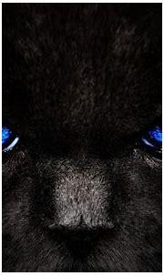 Кот глаза взгляд черный кошка - обои на телефон бесплатно.