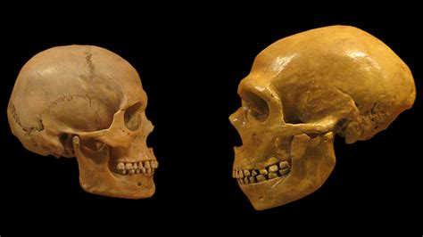 neanderthalensis annoyz view