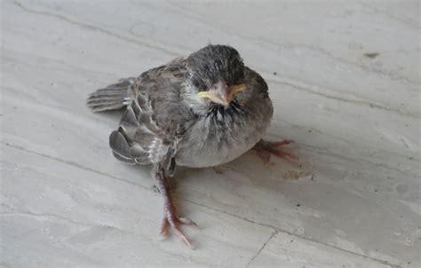 bird hurt by sc1r0n on deviantart
