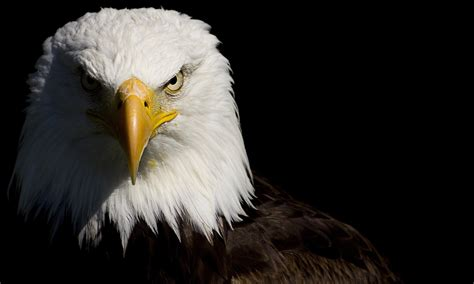 hd eagle eye pictures