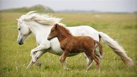 horse baby reference animals
