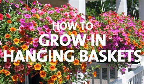 grow  hanging baskets palmers garden centre