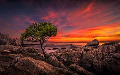 Horizon Ocean Sunset Umair Things Tree 4k