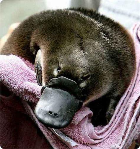 Weird News Weird And Ugly Animals On Planet