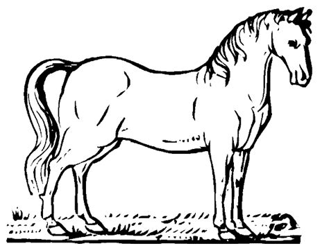 Cowgirl Coloring Pages - Eskayalitim