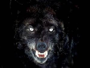 Black Wolf Wallpapers for Desktop - WallpaperSafari