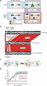Emergence And Spread Of Antibiotic Resistance In Bacteria Using P2 As A