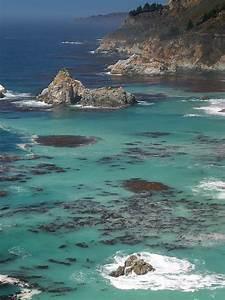 Marina Man Convicted Of Poaching Endangered Black Abalone