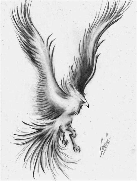 Pin by Briana Fishbein on Tattoo ideas | Phoenix drawing, Phoenix tattoo design, Tattoo designs