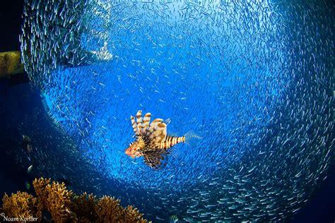Šodien - Pasaules okeānu diena