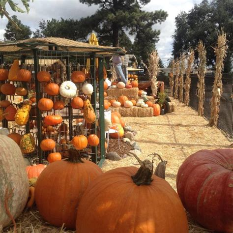 11 pumpkin patches to visit in arizona